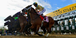 Cash In on this Year's Preakness Stakes with Pay Per Head Bookie Software